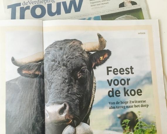 Feest: Zwitserse koeien komen terug